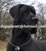 Dogo aleman grandanes cachorros en venta de criadero