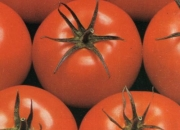 Venta de tomate larga vida (distribuimos a cundinamarca)