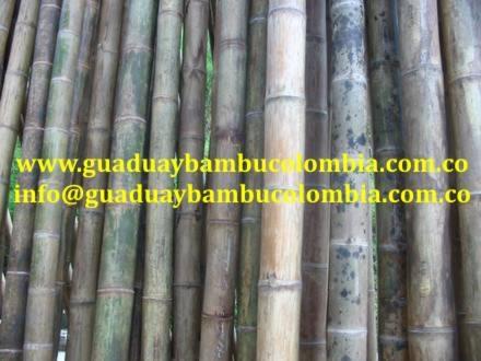 Vendemos guadua y bambu inmunizada y avinagrada