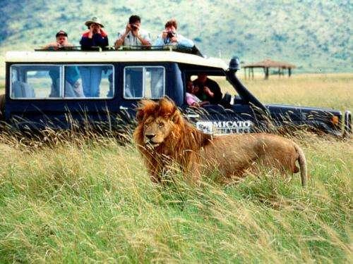 Viva africa el verdadero safari