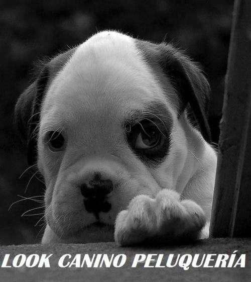 Look canino: peluquería canina a domicilio