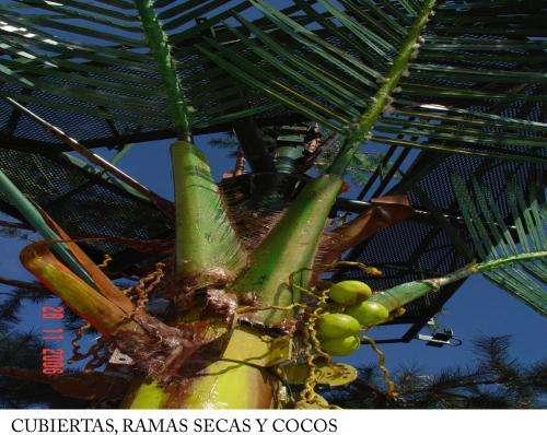 Fotos de Mimetizacion tipo palmera 2
