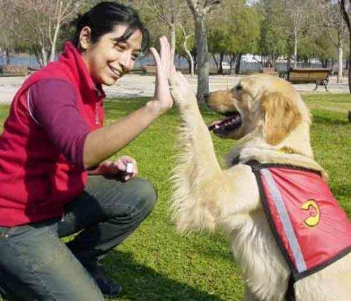 Mascotas express vende mascotas de pura raza