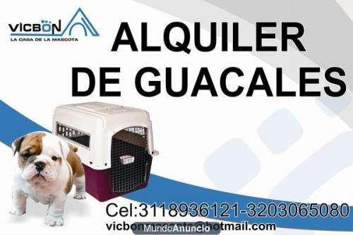 Alquiler de guacales para que lleve sus mascotas de viaje
