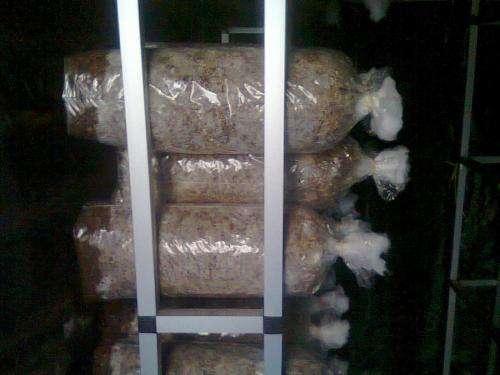 Producción de setas comestibles sobre residuos agroforestales
