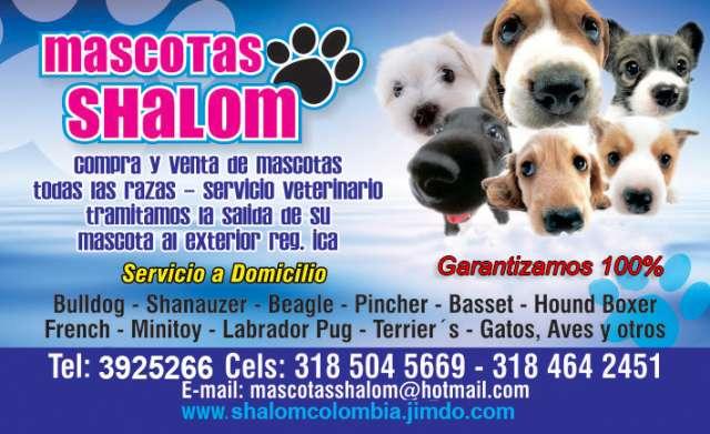 Mascotas shalom venta de todas la razas, perros cachorros, gatos