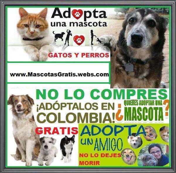 Urgente. gratuito. no lo compres. adopta perros y gatos. son recogidos en la calle, en tu ciudad, por la secretaria de salud y fundaciones, los recuperan, curan y entregan en adopcion. -control de na