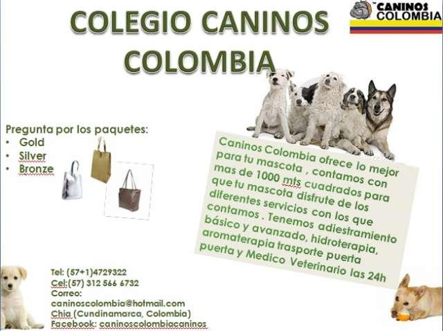 Colegio y guardería caninos colombia