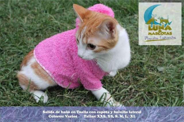 Fotos de Fabricantes y distribuidores ropa para mascotas 100% colombiana 4