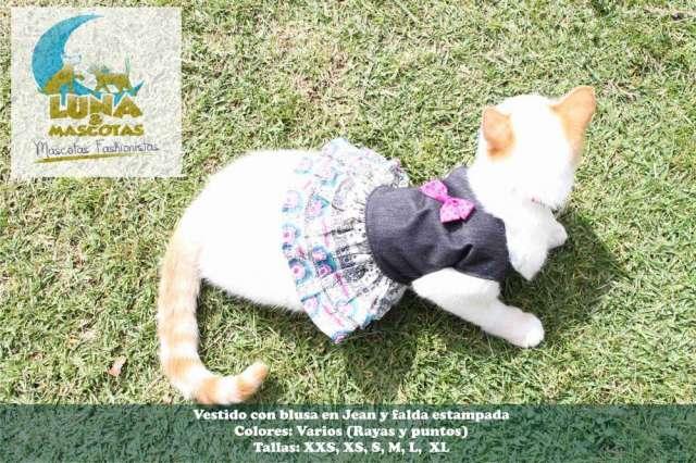 Fotos de Fabricantes y distribuidores ropa para mascotas 100% colombiana 3