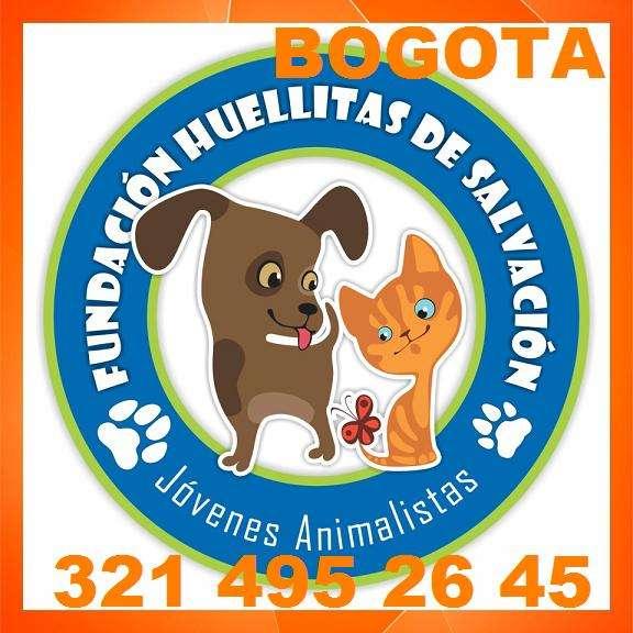 Adopcion perros, gatos, abandonados, fundacion huellitas de salvacion. lo entregamos con la vacuna antirabica y carnet, esterilizado, desparalizado y con placa de identificacion en caso de perdida. p