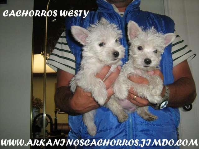 Venta de perros cachorros diferentes razas de criadero
