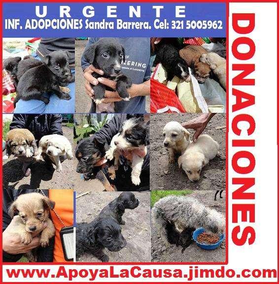 Fotos de Urgente, adopta mascotas, perros, gatos, recibimos donaciones. el refugio pasa h 1
