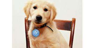 Servicios veterinarios (caninos, felinos) (bogota,d.c.)