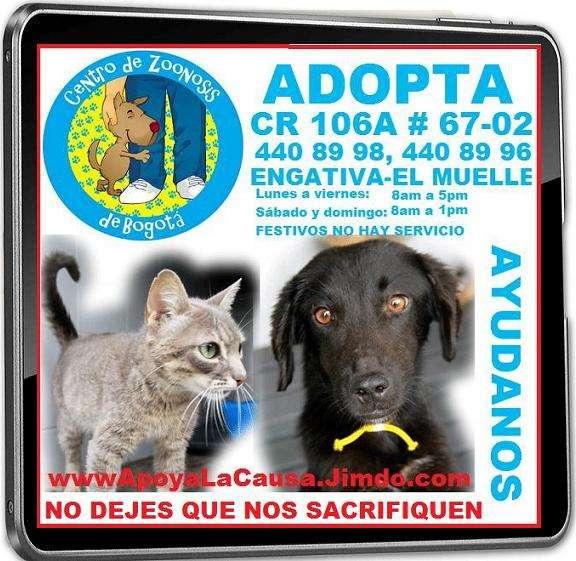 Obsequio. perros, gatos, no lo compres, adoptalos, no dejes que los sacrifiquen. perros, gatos, adoptalo, no lo compres, no dejes que los sacrifiquen, no son de raza, no son cachorros. pero son her