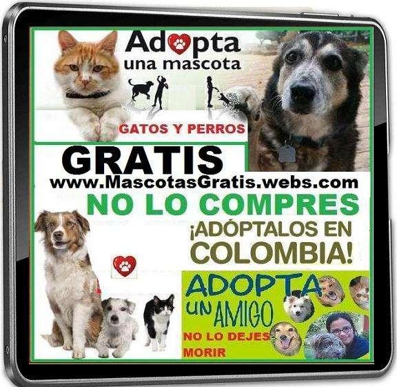 Fotos de Obsequio.  perros, gatos, no lo compres, adoptalos, no dejes que los sacrifiquen 2