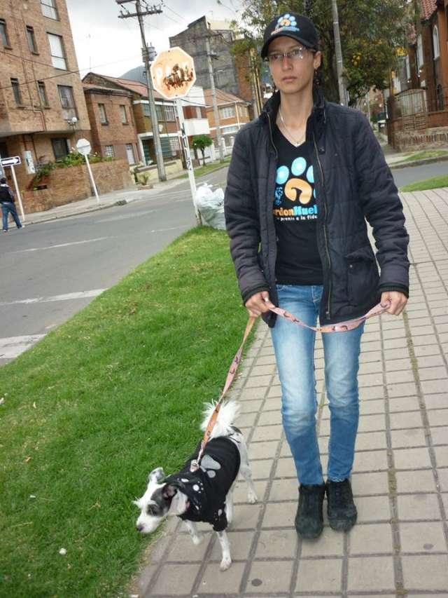 Paseador de perros ( paseos caninos) dog walker