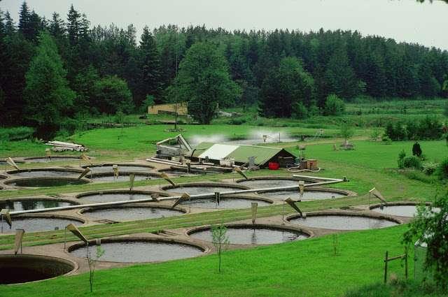 Valorice su propiedad, cria de mojarra tilapia y trucha en estanques