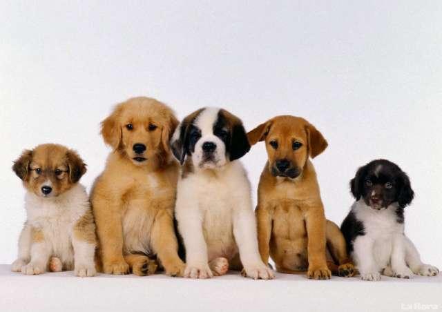 Educamos su perro sin golpes en la academia canina adr