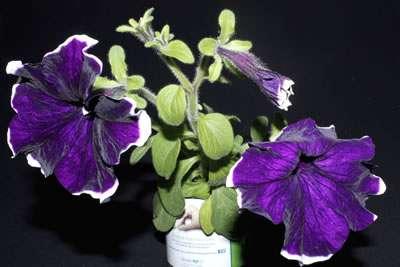 Plantas enlatadas personalizadas