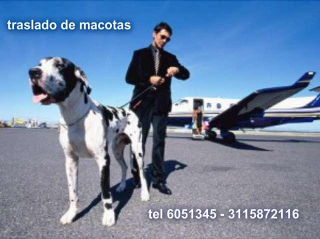 Traslado de mascotas servicio personalizado