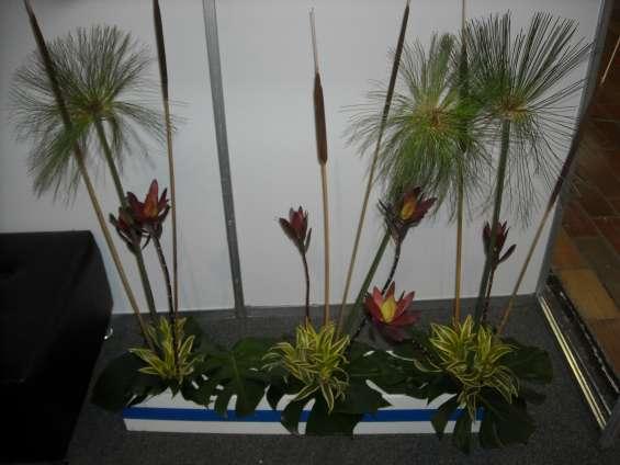 Matera plantas en alquiler,ambientacion