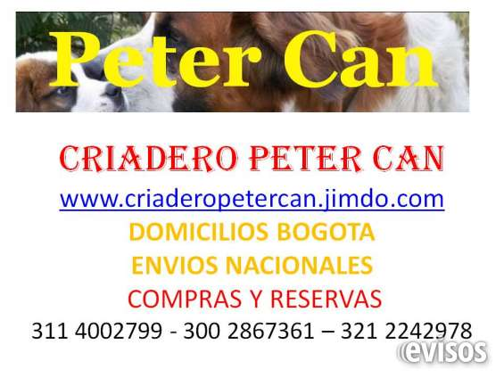 Criadero canino schnauzer beagle cocker french poodle mini toy