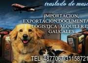 traslado para mascotas local nacional e internacional */