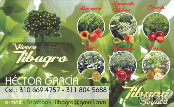 Venta de plantas de laurel