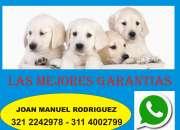 Grandes promociones de cachorros realmente criadero peter can en Bogotá