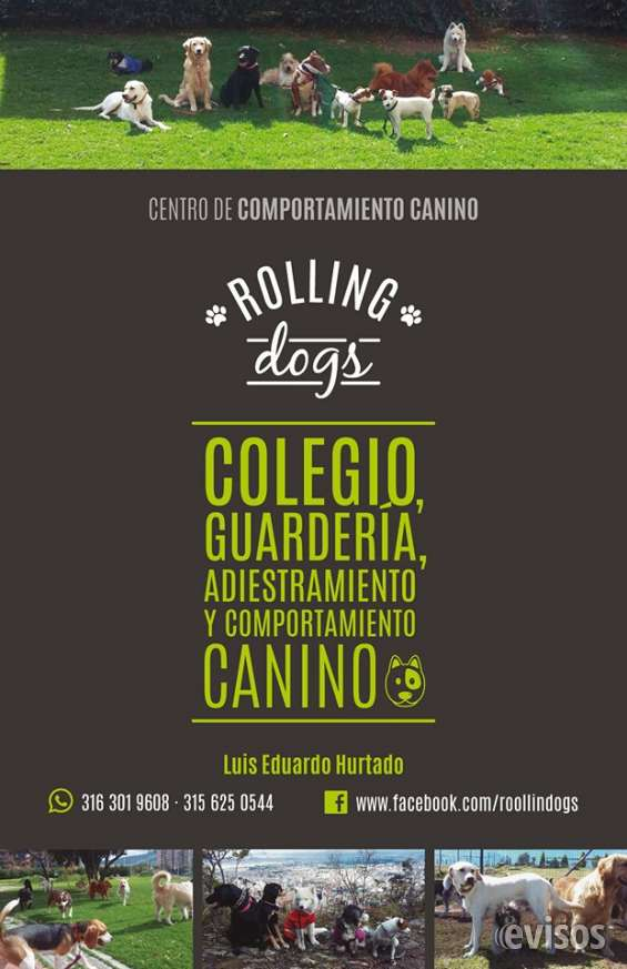 Rolling dogs guarderia campestre y adiestramiento canino a domicilio