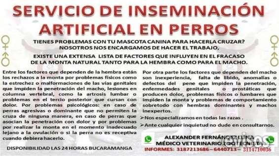 Servicio de inseminación artificial en perros