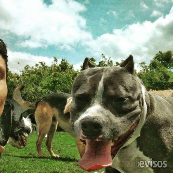 Fotos de Perros con  problemas de comportamiento?? 1