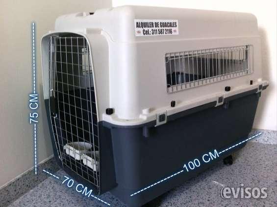 Alquiler de guacales para mascotas perros y gatos