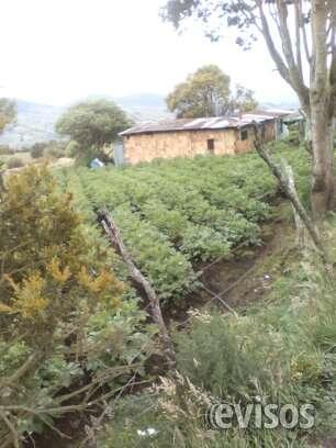 Regalo finca en usme cultivable de 13 hectareas