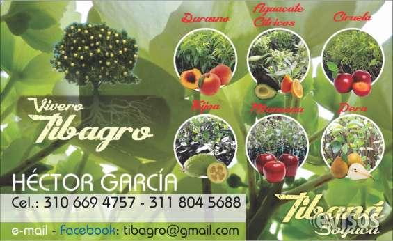 Eugenias. venta de plantas de eugenias